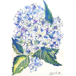 Hydrangeas  Watercolour on A4 paper 300g
