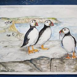Atlantic puffin by (Fratercula Arcti