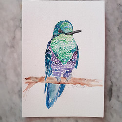 Hummingbird by Liz H Lovell
