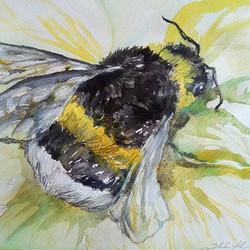 Bumble Bee Walk