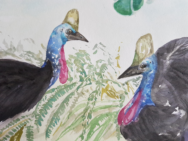 Cassowaries