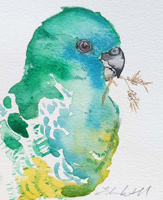 Red-rumped parrot(Psephotus haematonotu