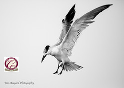 Silver Award -Guild of Photographers