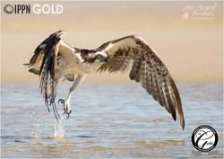 Gold Award IPPN, Silver Award Guild
