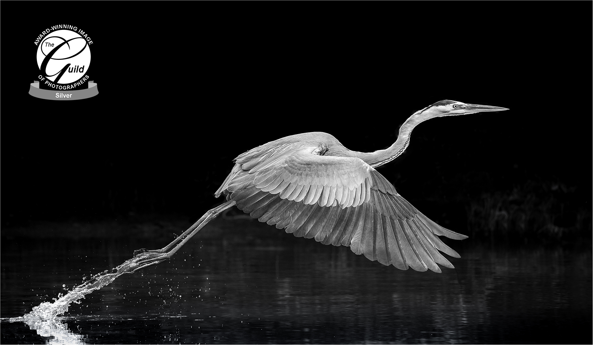 Silver Award - Guild of Photographer