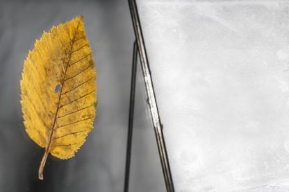 DustyEye_-_ID_N°44_Reliquia_09.jpg