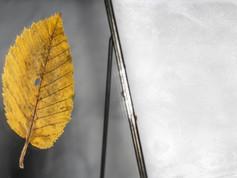 DESCRIZIONE La foglia cadde ai piedi di N°44 nel settembre del 2313. Ergendola a sineddoche dell'Universo, la osservò fino a dicembre senza mai distogliere l'attenzione.   DIMENSIONI 10.5 CM   MATERIALI tessuto vegetale Cornice: vetro, metallo