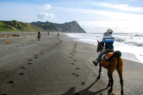 Horse trekking, New Zealand