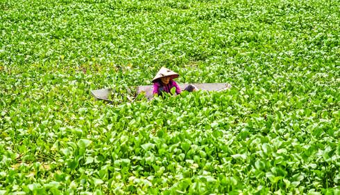 North vietnamese countryside, Vietnam