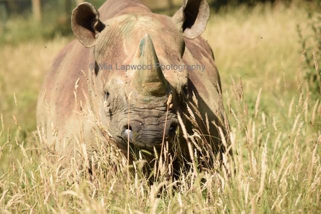 Rhino 10