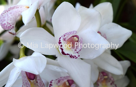 W13 - White Orchids