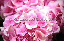 P3 - Pink