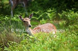 D7 - Deer