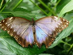Butterfly 4 wm