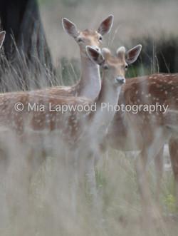 D12 Deer xm