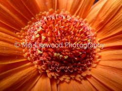 O1 - Orange Gerer