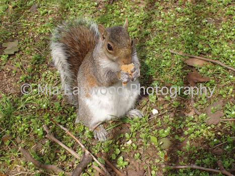 Squirrel - W9 wm