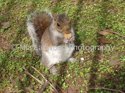 Squirrel - W9 wm