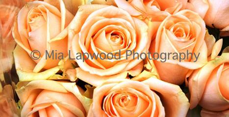 PE2 - Peach Roses