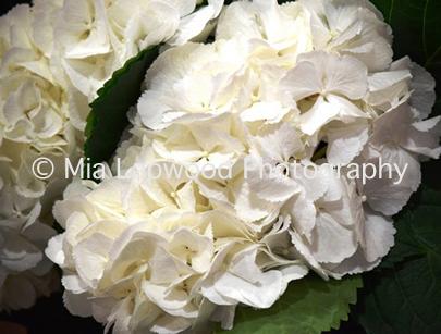 W4 - White