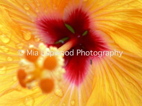 Y3 - Yellow Hibiscus