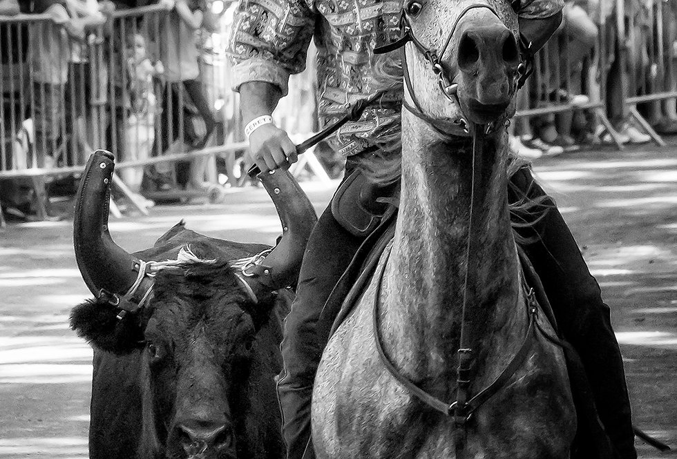 bull horse man