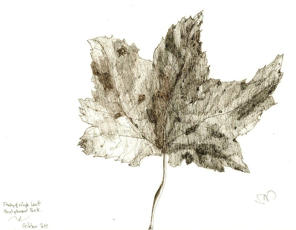 Decaying Maple Leaf Study, ink drawing