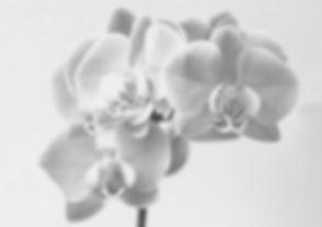 petra-kessler-1075551-unsplash_edited.jp