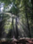 Wald1.jpg