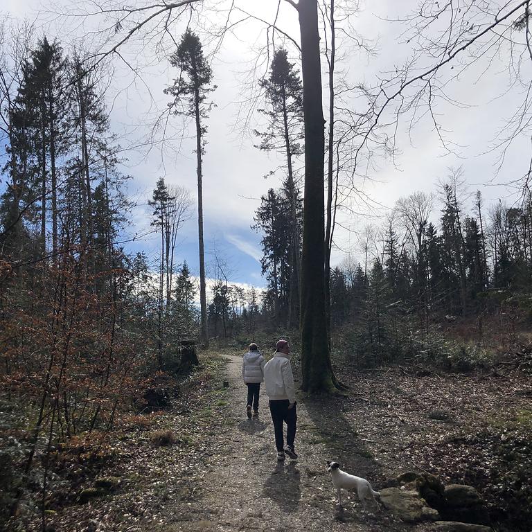 Gemeinsame Waldbegehung Nutzwald Küsnacht