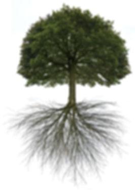 Baum%2520it%2520Wurzeln_edited_edited.jpg
