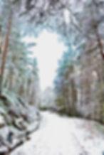 Winner - Path through the Snow