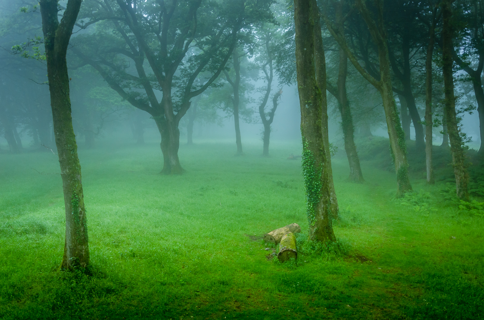 Misty Green Wood