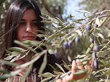 006-olives-olivepress.jpg