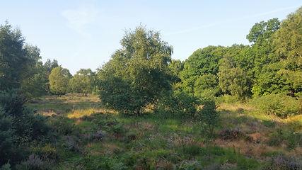 20200812-Walk-Burghclere Common.jpg