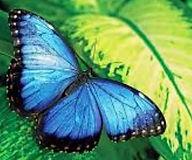 Butterfly Brand Logo.JPG