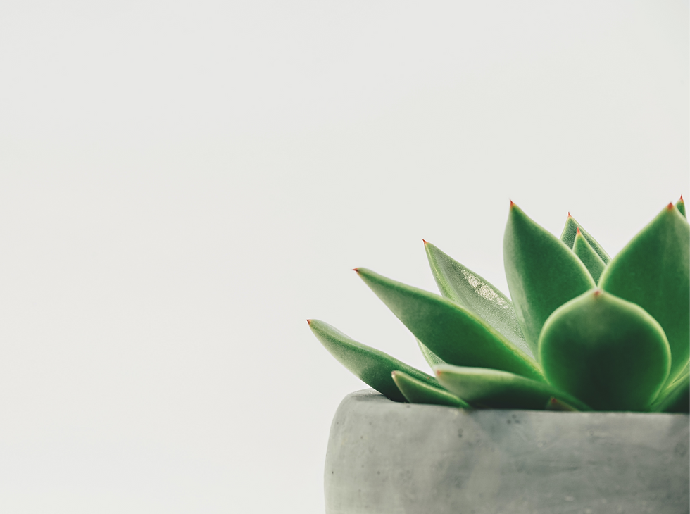 Enjoy%20a%20potted%20succulent%20in%20minimalist%20form._edited.png
