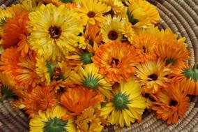Calendula: A beautiful amber coloured flower or a little bit more?