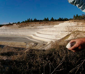 Diatomaceous Earth: Magic  Powder from Mother Nature