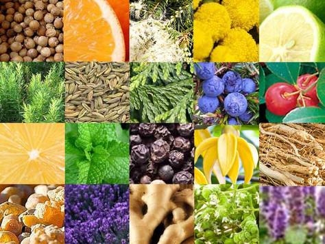 Perché le piante producono oli essenziali
