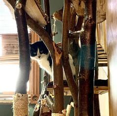 Gallery-cathouse4.jpg