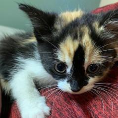 Gallery-kitten.jpg