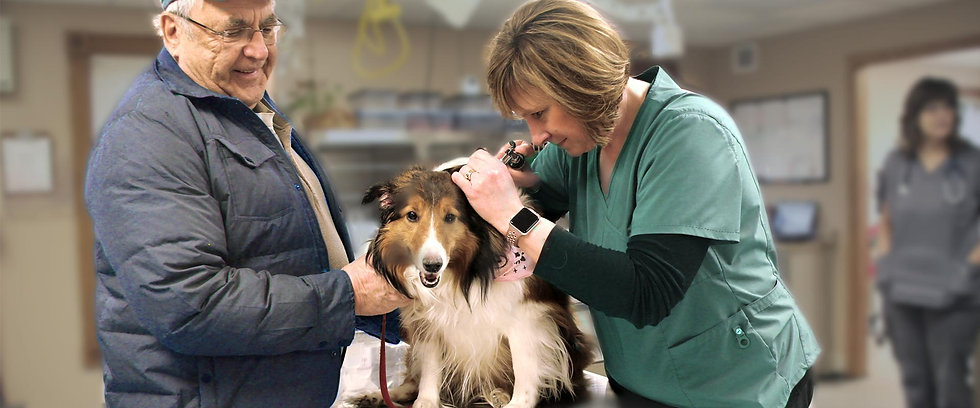 Dr. Heather Wood, Wellness Care at Twin Lakes Veterinary Hospital