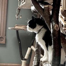 Gallery-cathouse2.jpg