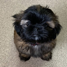 Gallery-puppy2.jpg