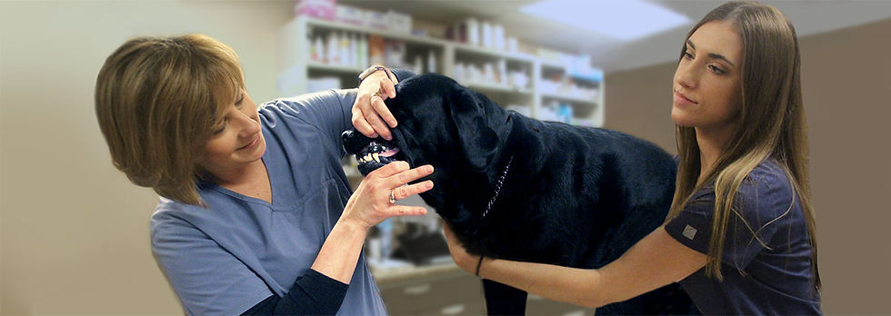 Pet Dental at Twin Lakes Veterinary Hospital