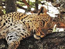 Bittner_TANZ_2018_leopard_tree_close_WEB