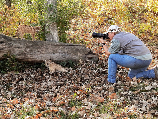 Linda Bittner Capturing Cats