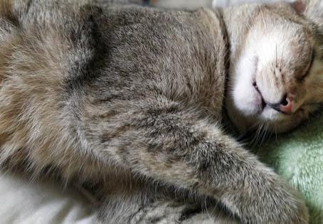 Nap a little