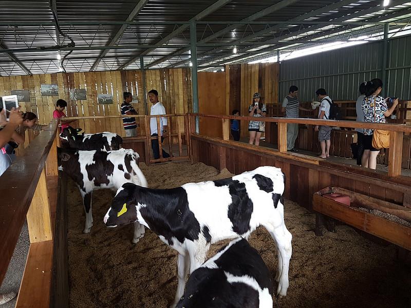 Desa Dairy Farm 05.jpg